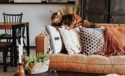 Magnificent Bohemain Home Decor Ideas and Furniture Styles On What is Bohemian Style